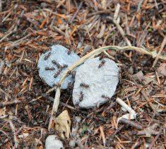 ants pest control essex 235x210 - Ants