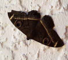 moths pest control essex 235x210 - Moths