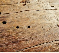 woodworm pest control essex 1 235x210 - Woodworm Problems & Removal